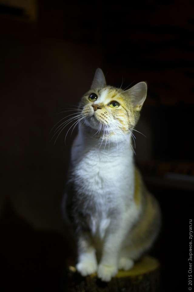 """Благотворительная фотосессия для кризисной передержки бездомных животных """"Ковчег"""" в Кронштадте"""